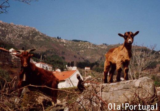 ポルトガルの動物