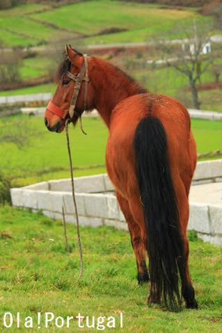 Alter do Chao アルテール・ド・シャォンには王立種馬飼育場