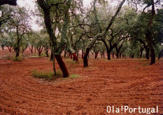 ポルトガル旅行記:アレンテージョ地方のコルク林