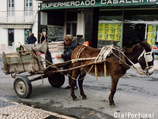 ポルトガルの動物:ロバ