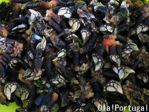ポルトガルの海鮮:Percebes ペルセベシュ(亀の手)