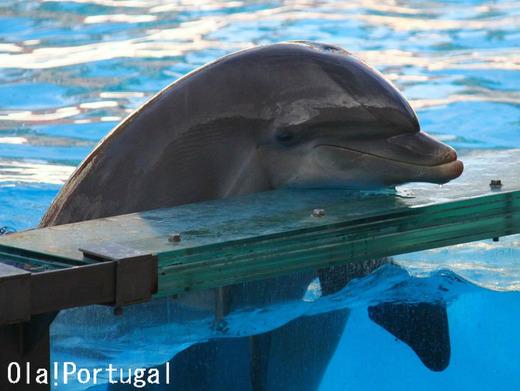 リスボン動物園のイルカとアシカのショー