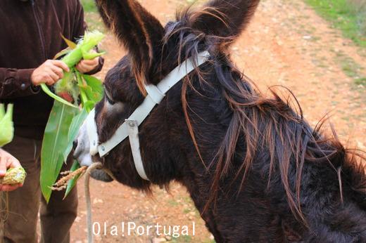 ポルトガル・オプショナルツアー:ドンキーライド