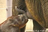 とべ動物園アフリカゾウのブログ「やぁ!とべとべずー」