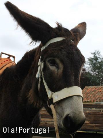 ポルトガルの動物達:ミランダ・ロバ