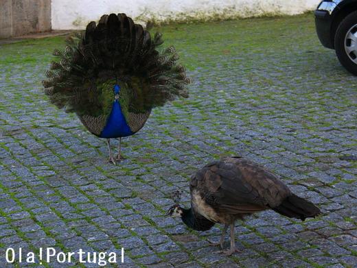 ポルトガル旅行記:ポルト(ポートワインのワイン蔵訪問記)