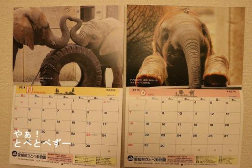 愛媛県立とべ動物園の公式カレンダーに採用