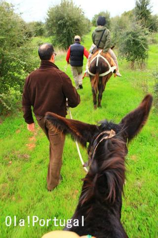 ポルトガル、ロバの体験乗馬
