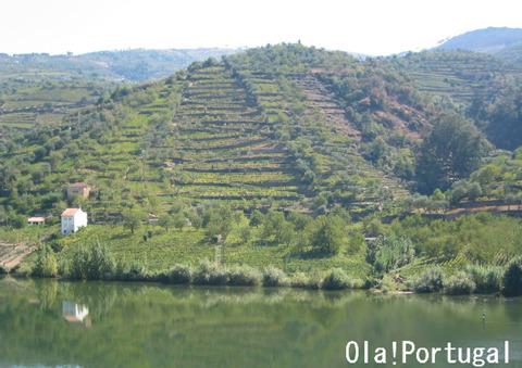 ポルトガルの世界遺産:ドウロ川流域