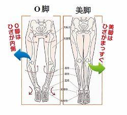 o_bone