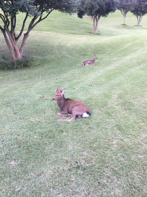 ゴルフコンペに参加してきました。