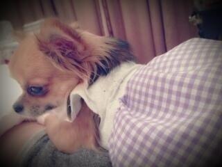 https://livedoor.blogimg.jp/omaeranews-idol/imgs/8/b/8b20db62.jpg
