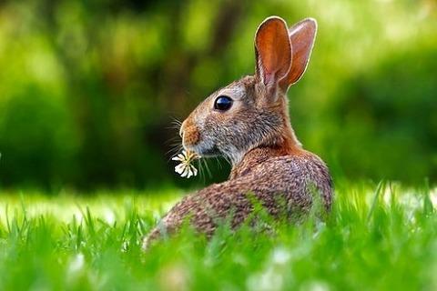 rabbit-1903016__340