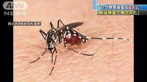 デング熱蚊
