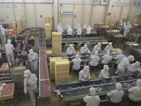 工場 バイト