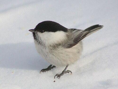 「図鑑でかわいい小鳥を見ていたら…本物が覗きにやって来た!」ディズニーアニメのような状況に