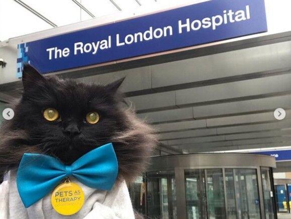 人間には猫の癒しが必要。ロンドンのセラピーキャット、複数の病院を巡回し患者たちを勇気づけている(イギリス)