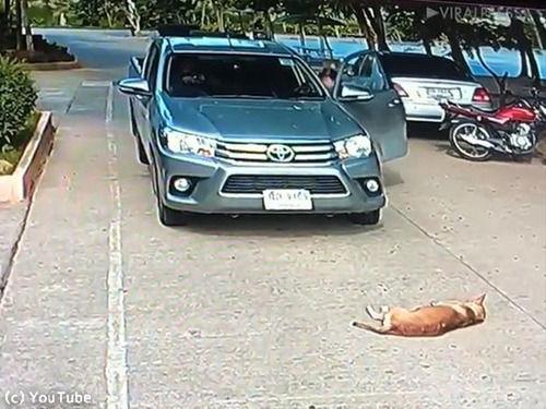 この犬…お昼寝のしかたがマイペースすぎる(動画)