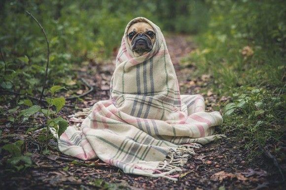 愛犬は本当に幸せなのか?専門家が教えてくれた、愛犬を理解するための10のチェックリスト