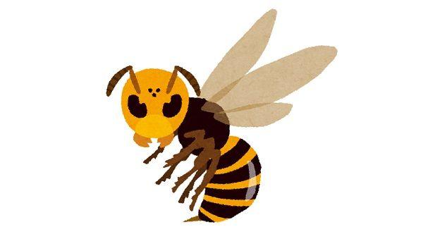 家に蜂の巣を作らせない方法「人にも蜂にも優しいやり方でおすすめ」