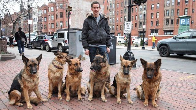 散歩中の姿が格好良すぎる、シェパード犬の群れを従える男