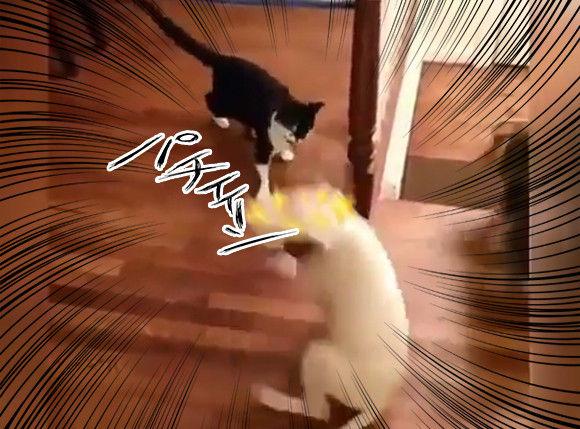 これほどまでだったのか!猫パンチの攻撃力の高さに犬が回転する