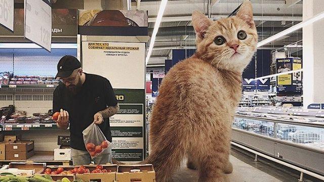 巨大猫のいる風景。自分と共に巨大な猫がいる風景を作るロシア人アーティスト