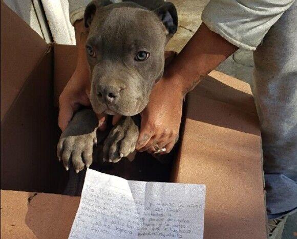 保護施設の外に子犬と置き手紙。少年が犬を手放さなければならなかった理由(メキシコ)