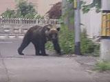 【動画】 話題の札幌市に連日出没のクマ、けさ猟友会のハンターが駆除