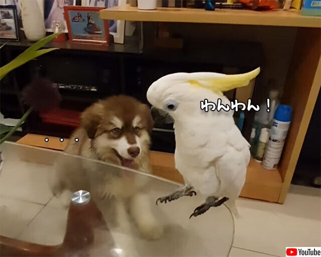 声を奪われた?ワンワン鳴くオウムと鳴かない犬
