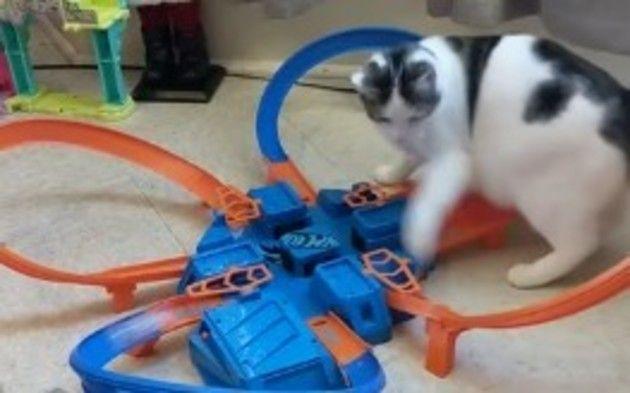 【動画】 ネコを翻弄する速すぎるホットウィールミニカーのコースww!!