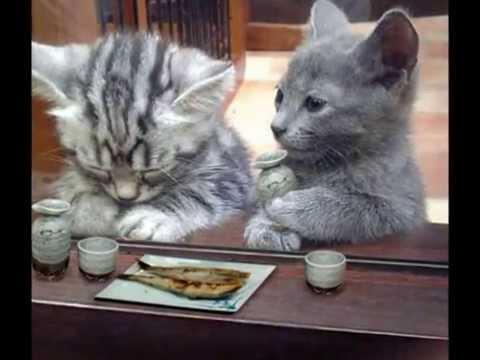 面白い動物サラリーマン子猫