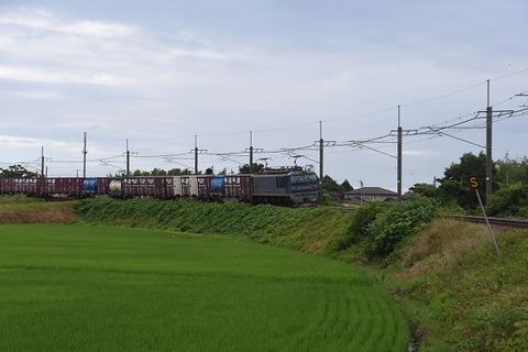 DSC_9956-1