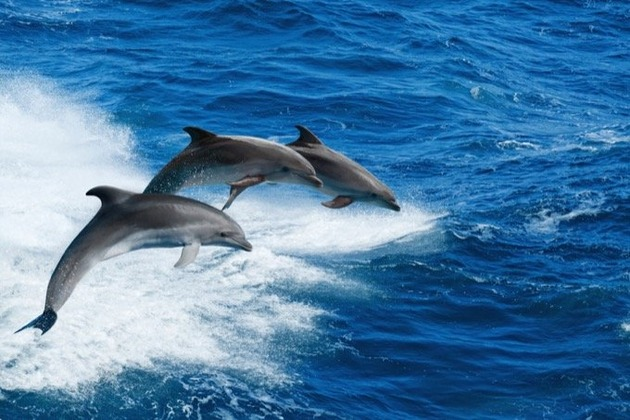 0612dolphins-2