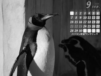 パソコン教室 2009年9月カレンダー 東山動物園のペンギン