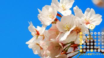 名古屋市瑞穂区の山崎川の桜