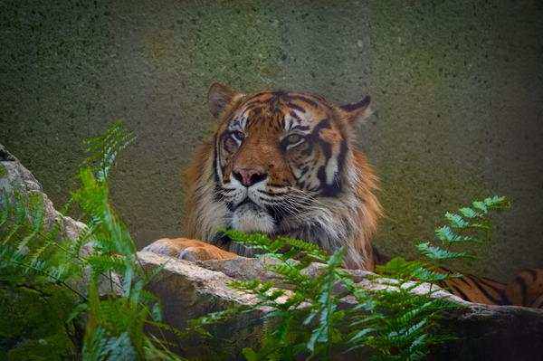 東山動物園2015 (4)