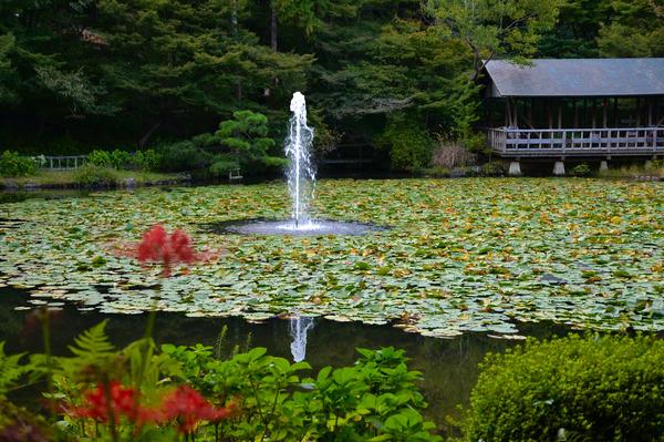 東山動物園2015 (14)