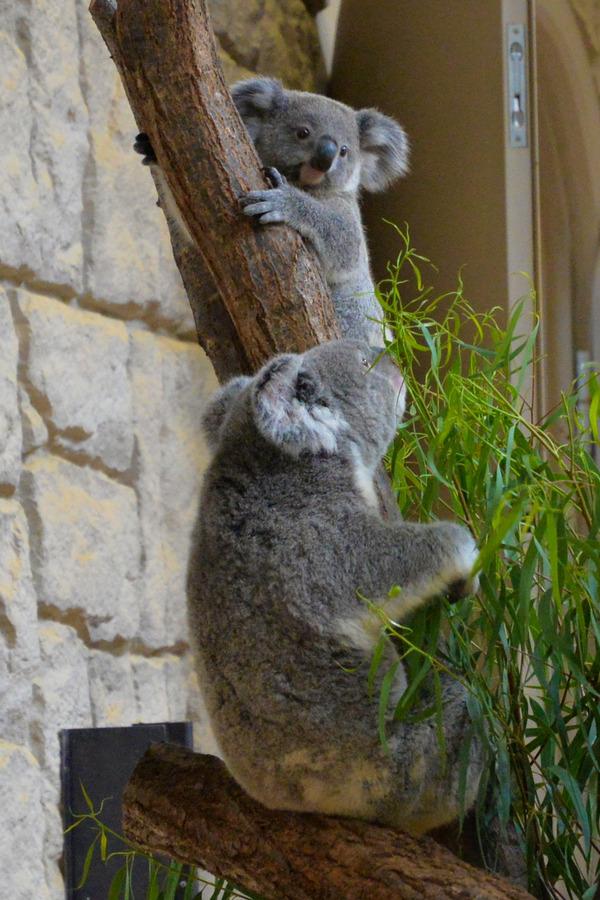 東山動物園2015 (9)