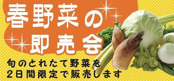 春野菜販売会
