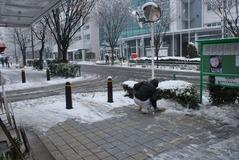 雪の日002