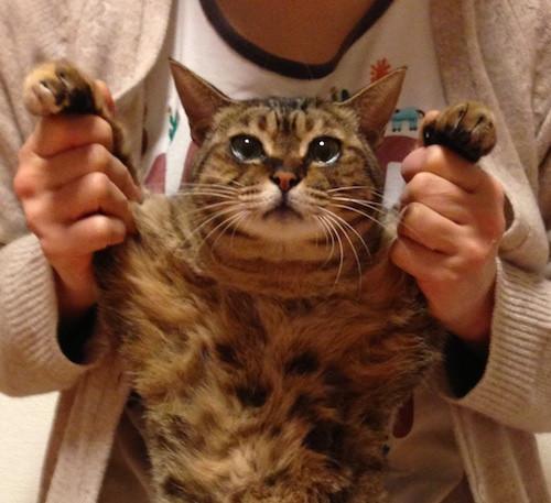 ペットと飼い主の健康:体内環境と住居環境