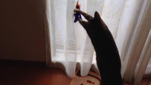 室内猫には運動必須。ダ・バード