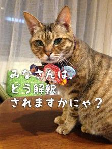 猫は、飼い主に単に興味を持っているだけだろうか?