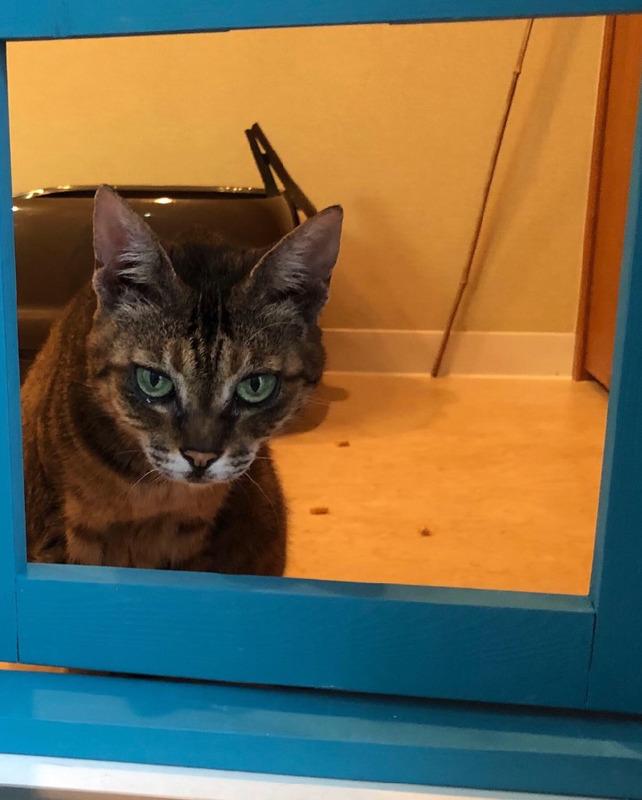 【DIY】ベランダ網戸にキャットドアを装備してみた。