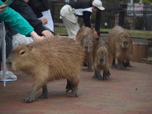 動物園の環境エンリッチメント