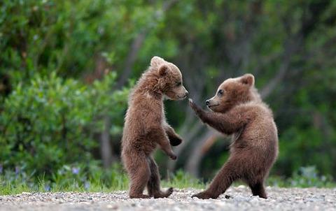 fight_b