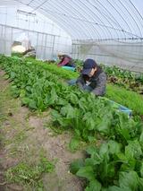 20121113収穫1