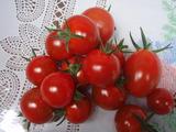 20120618ミニトマト