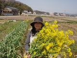 菜の花と管理者